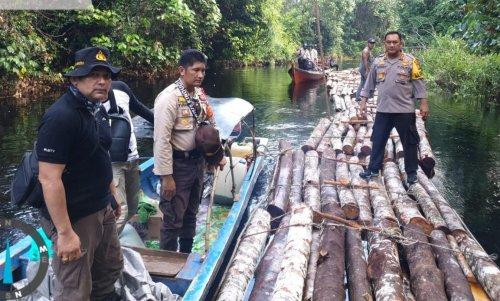 Diduga Illegal Logging, Kayu Gelondongan Banyak Mengapung di Sungai Menuju TM Danau Zamrud