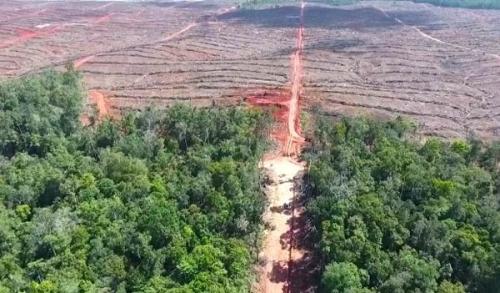 Luas Pencurian Tanah Negara untuk Sawit Capai 1,2 Juta Hektare, Wakil Gubernur Riau Langsung Pimpin Operasi Penertiban