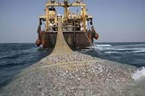 Di Penipahan Rohil, Perdagangan Ikan Satu Hari Capai Rp5 Miliar tapi Nol PAD