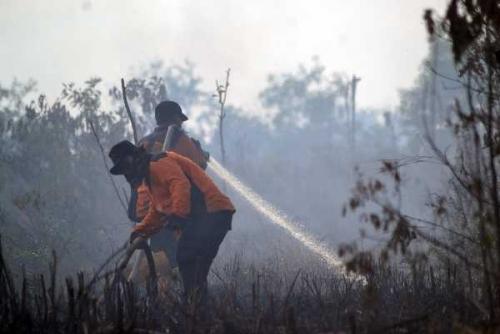 Kabut Asap Lumpuhkan Industri di Riau