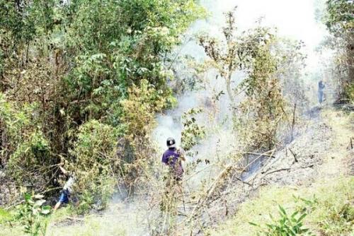 Satu Titik Api Nongol di Kuala Kampar, Upaya Pemadaman Dilakukan