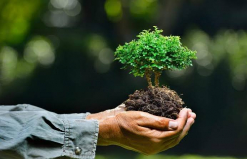 Selamatkan Lingkungan, Yuk Jadi Volunteer di Bakti Konservasi KPK Riau