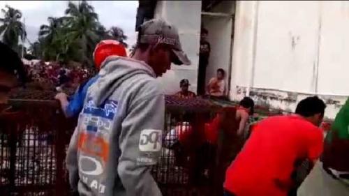 Ditunggu Seharian, Harimau yang Masuk ke Bawah Ruko di Pasar Pulau Burung Inhil Belum Juga Keluar