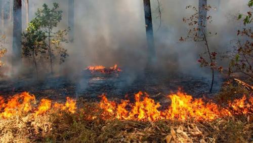 Awalnya Hanya Bakar Semak Belukar, Warga Rupat Ditahan Polisi karena Api Meluas Lahap 20 Hektar Lahan