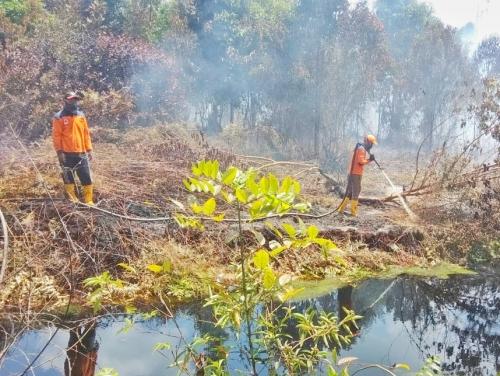Pagi Ini 46 Hotspot di Kabupaten Bengkalis, BPBD Riau: Baru Dua Tetapkan Status Siaga Darurat Karhutla
