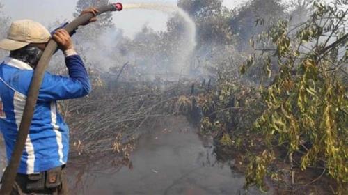 Wah, Diduga Ada Mafia Lahan di Balik Kebakaran Hutan Taman Nasional Tesso Nilo