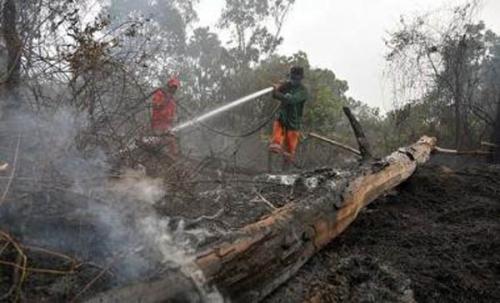 Pemain Lama Lahan Taman Nasional Tesso Nilo Ternyata Sudah Pernah Masuk Penjara