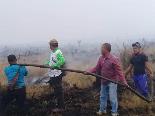 Karhutla Terjadi di Sejumlah Titik Pelalawan, Lahan Terbakar di Penarikan Langgam Mencapai Ratusan Hektare