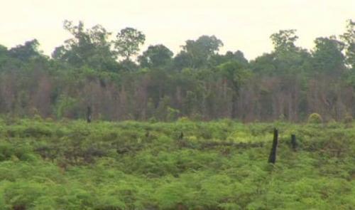 Pengakuan BRG RI, di Kepulauan Meranti Paling Cocok untuk Penelitian Gambut