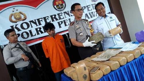 Polisi Sita 30 Kg Ganja di Pelalawan, Satu Pengedar Ditangkap