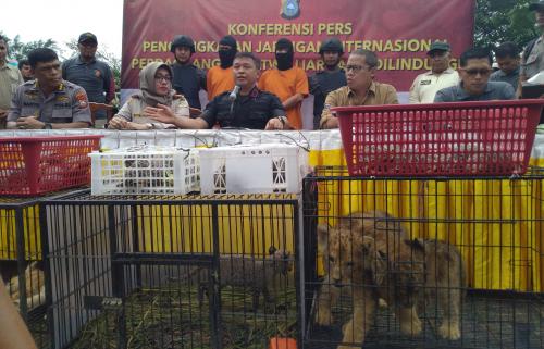 Polda Riau Amankan 63 Ekor Satwa Liar Dilindungi yang Diselundupkan dari Luar Negeri