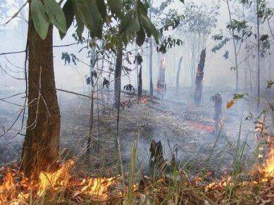 Daftar Kecamatan Dan Lahan Di Kota Surabaya