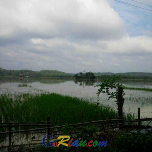 Akibat Banjir, 2.481 Hektare Sawah Gagal Panen di Riau