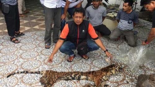 Polda Riau Ringkus 3 Pelaku Perdagangan Organ Harimau di Inhu