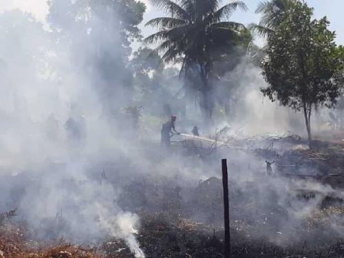 Cuaca Panas, 40 Hektare Lahan di Kubu Rohil Terbakar