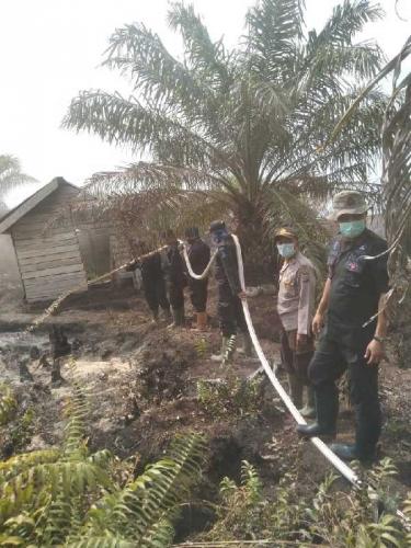 Polres Rohil Buru Pembakar 5 Hektare Lahan di Desa Teluk Nilap Rohil