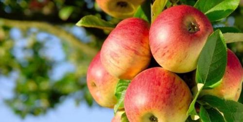 Rutin Konsumsi Buah yang Mudah Didapat Ini Bisa Cegah Penuaan Dini, Sakit Jantung dan . . . .