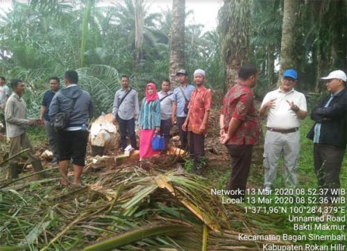 Pemkab dan Bumdes Rohil Gandeng Unilever Indonesia Garap Industri Gula Sawit dan Nipah