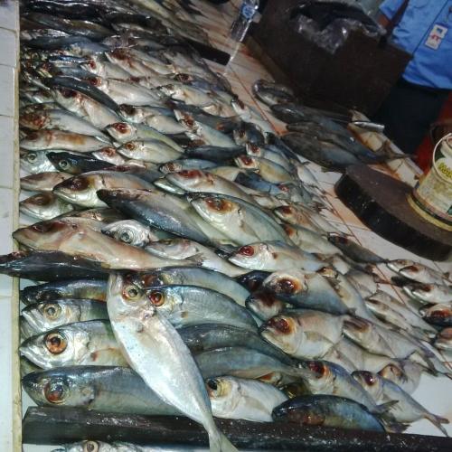 Sidak Pasar Terubuk, Disperindag Bengkalis Temukan Ikan Tak Layak Konsumsi Dipajang di Lapak