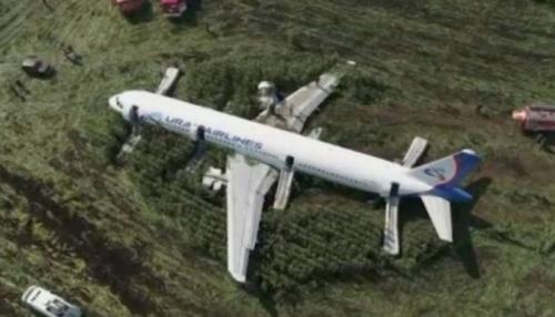 Begini Penampakan Pesawat Bermuatan 233 Penumpang yang Mendarat Darurat di Ladang Jagung
