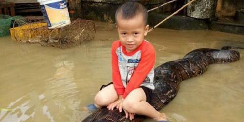 Bocah 3 Tahun Sambil Tertawa Kendarai Ular Piton Raksasa di Tengah Banjir, Lihatlah Penampakannya