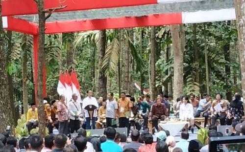 Jokowi Imbau Petani Hentikan Tanam Sawit dan Karet, Ini Tujuannya