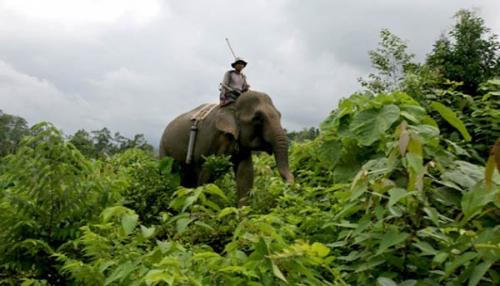 Seruni Beranak di Hutan Balai Raja Riau