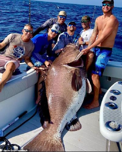 Nelayan Tangkap Ikan Kerapu Raksasa Seberat 158,7 Kg, Ini Penampakannya