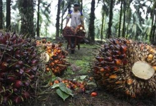 Capai 2,4 Juta Hektare, DPRD Riau Rekomendasikan Pembentukan Dinas Perkebunan