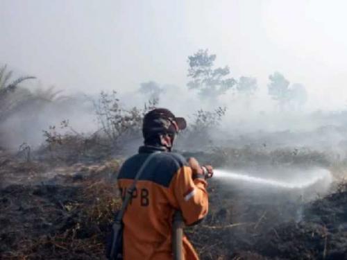 797,53 Hektar Lahan di Riau Terbakar Selama Januari hingga Pertengahan Maret 2020