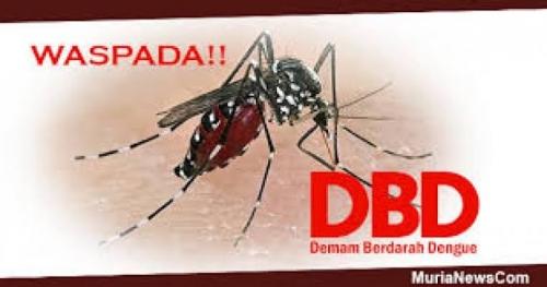 Kasus DBD di Pekanbaru Telan Korban Tahun Ini