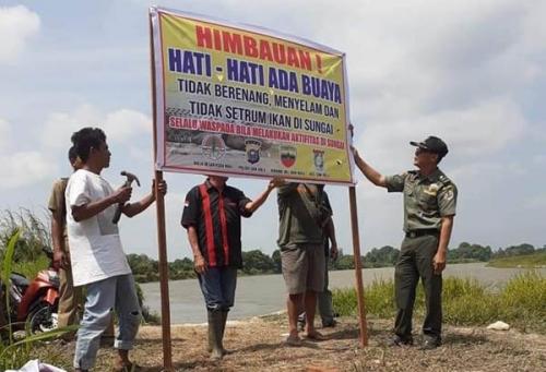 Sepasang Buaya Berjemur di Pinggir Sungai Kampar Tepatnya di Desa Pangkalanbaru