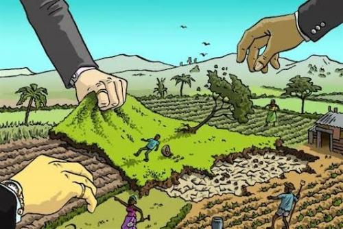Lahan Konsesi Seluas 18 Ribu Hektar di Pulau Rangsang akan Diambil Alih Masyarakat