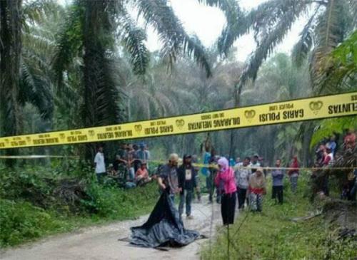 Diduga Dibunuh, Warga Dumai Temukan Mayat Lelaki di Jalan Perkebunan