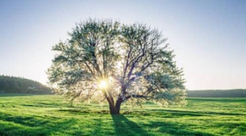 Warga Kota Ini Bisa Adopsi Pohon Sebagai Anak atau Saudara