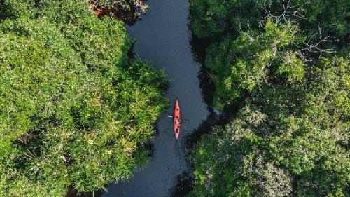 Enam Tahun Restorasi Ekosistem Riau, 797 Flora dan Fauna Terindentifikasi