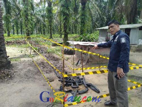 Begini Cara Pencuri Sedot Minyak Bumi dari Pipa Chevron Pacific Indonesia di Kampar Kiri