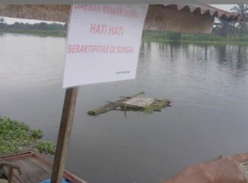Warga Sungai Rangau Cemas karena Sering Lihat Buaya Muncul