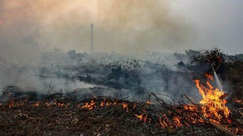 Riau akan Dilanda Kemarau Selama Tujuh Bulan, Ini Imbauan DPRD Pekanbaru