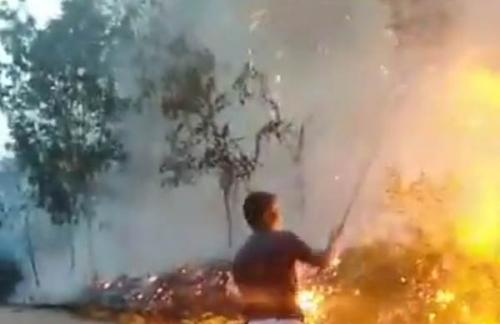 Kebakaran Hutan Terjadi di Desa Muara Takus