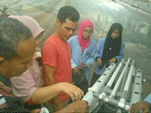 Mahasiswa Kukerta Unri Kenalkan Tanaman Hidroponik ke Warga Tanjung Beringin Pelalawan