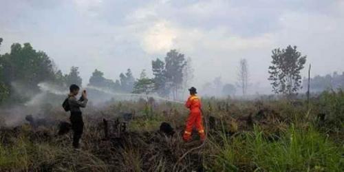 Jalankan Komitmen Pemantauan Kebakaran, PT Tunggal Mitra Plantations Padamkan Api di Rokan Hilir