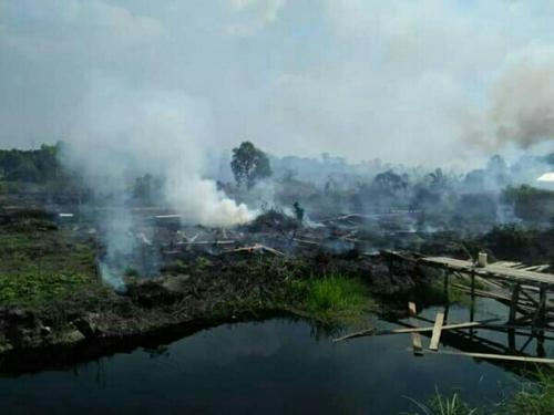 Lahan di Teluk Binjai Terbakar Sejak Selasa Kemarin, Api Belum Padam