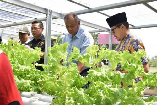 Nasib Kelompok Tani Bukit Mekar di Lahan Pertamina, Menggarap Lahan Berpasir Menjadi Agro Wisata