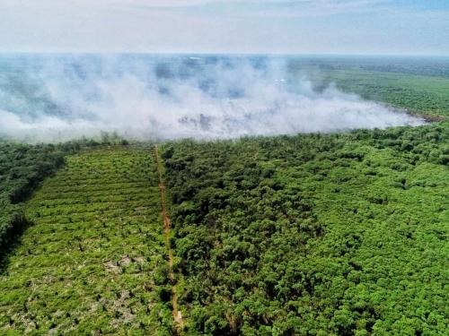 Basahi Lahan Gambut 6 Provinsi Termasuk Riau, BRG Gelontorkan Anggaran Rp4,1 Miliar
