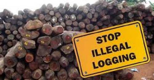 Bawa 16 Kubik Kayu Ilegal dari Kawasan Konservasi Kerumutan, Empat Komplotan Ditangkap