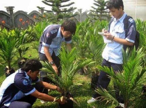 Apkasindo Dumai Dorong Pemerintah Membangun Kampus Politeknik Kelapa Sawit Negeri