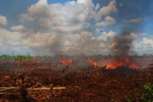 Menteri LHK Tetapkan Riau dan 5 Provinsi Lain Darurat Kebakaran Hutan dan Lahan