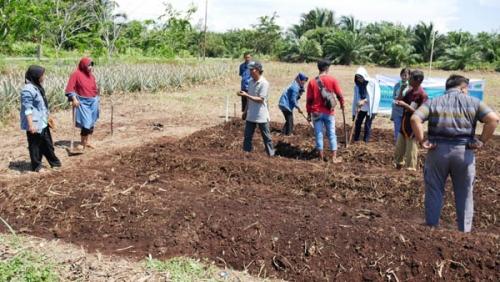 Tidak Lagi Buka Lahan dengan Membakar, Desa Lalang Manfaatkan Pupuk Organik
