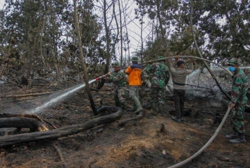 Tertimpa Pohon Saat Bertugas Padamkan Kebakaran Hutan, Anggota Manggala Agni Meninggal